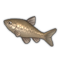 Topmouth Gudgeon.png
