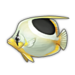 Saddle Butterflyfish.png