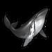 Humpback Whale.png