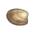 Littleneck Clam.png