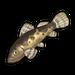 Freshwater Sleeper.png