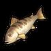 Golden Mandarin Fish.png