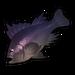 Purple Rockfish.png