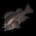 Rockfish.png
