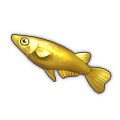 Golden Ricefish.png