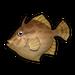 Thread-Sail Filefish.png