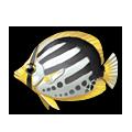 Blackback Butterflyfish.png