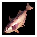 Red Sailfin Sandfish.png