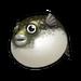 Blowfish.png