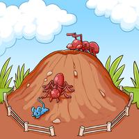 https://www.marapets.com/ants
