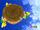 Koopa Troopa gigante