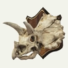 100px-SMO Triceratops Trophy Souvenir.png