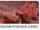 MK8 Screenshot Knochentrockene Dünen Icon.png