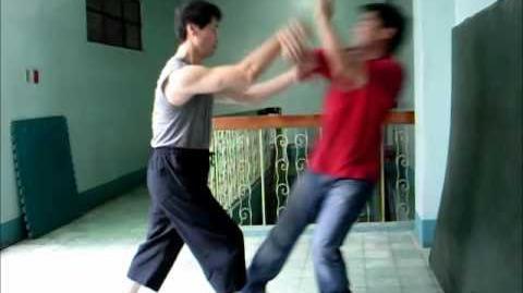 Xinyi Liuhebafa Xinyi Zhanzhuang - Fajing