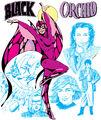 Black Orchid 0001
