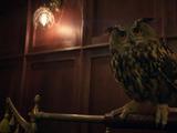 Hootie the Owl (Stargirl TV Series)