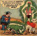 Kryptonite Dog 001