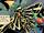 Tiger Moth II (New Earth)
