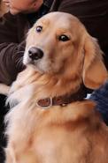 Lucky Dog Infobox