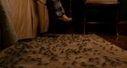 Ants on carpet