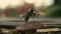 Ant-Man entrenando con Antony
