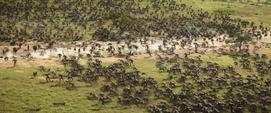 Batalla de Wakanda - AIW