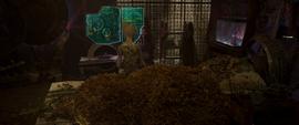 Groot deja su cuarto desordenado