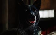Banner's dog
