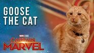 Goose the Cat gets ready for the Captain Marvel Red Carpet!