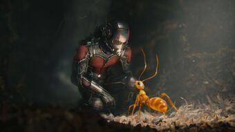 Ant Man Marvel Cinematic Universe Wiki Fandom