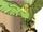Barretta (Parakeet) (Earth-616)