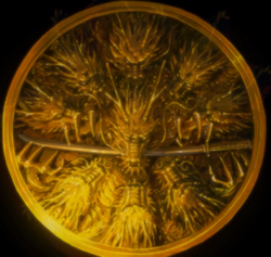 Kuzuryu symbol from Marvel Anime Season 2 1.png