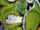 Green Goblin (Construct) (Earth-616) from Spectacular Spider-Man Vol 1 250 001.jpg
