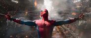 Webline-Spider