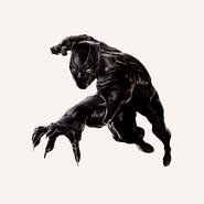 Black Panther cw