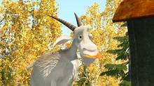 43 Коза