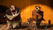 68 Медведь и Гималайский медведь