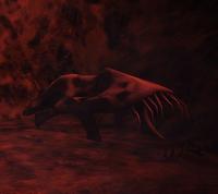 "The ""Odd Skull"" of the unknown creature"