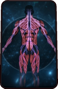 Codex Card Pathfinders Implants.png