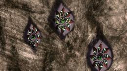 Tre difese oculari, con quella al centro in caricamento
