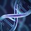 Macro genetics.png