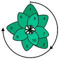 Zlatni ugao kod nekih cvjetova