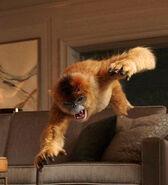 Золотая обезьяна прыжок телесериал