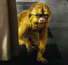 Золотая обезьяна постер фрагмент Франция.jpg
