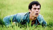 Thomas grass
