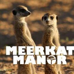 Meerkat Documentaries