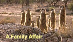 A Family Affair.jpg
