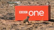 Planet Earth Live pup