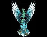 Aellopus.PNG