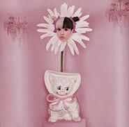 Mm daisy